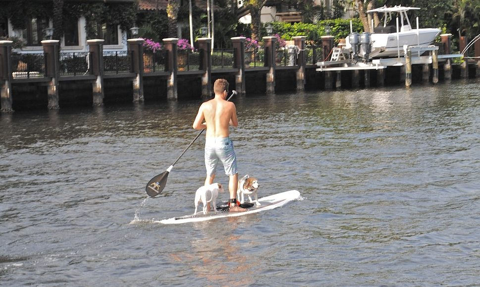 Paddle Board with Dog